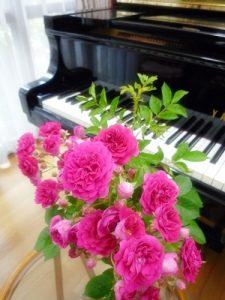 新座市ピアノ教室,Sumi